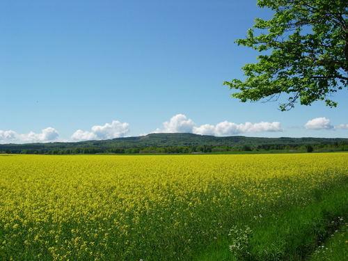 Sverige – det vackra avlånga landet